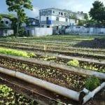 Havana's Self-Provision Gardens